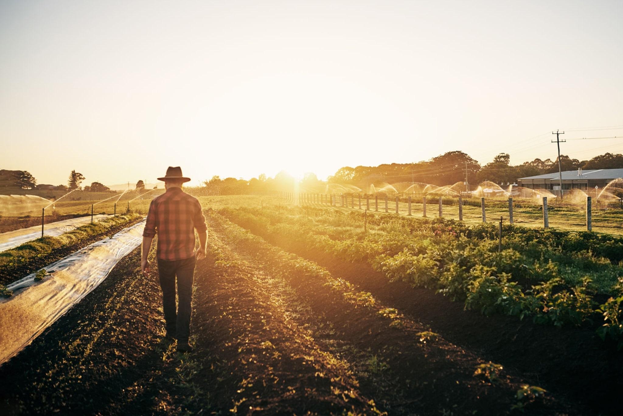 Complementos Jubilatorios para Productores Rurales
